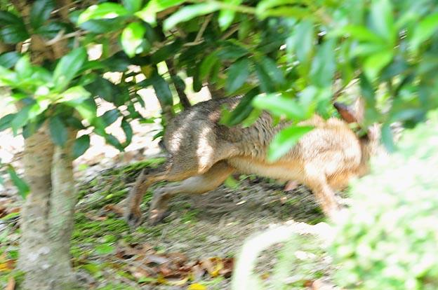 ニホンノウサギの画像 p1_17