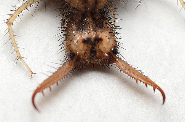 ウスバカゲロウの画像 p1_18